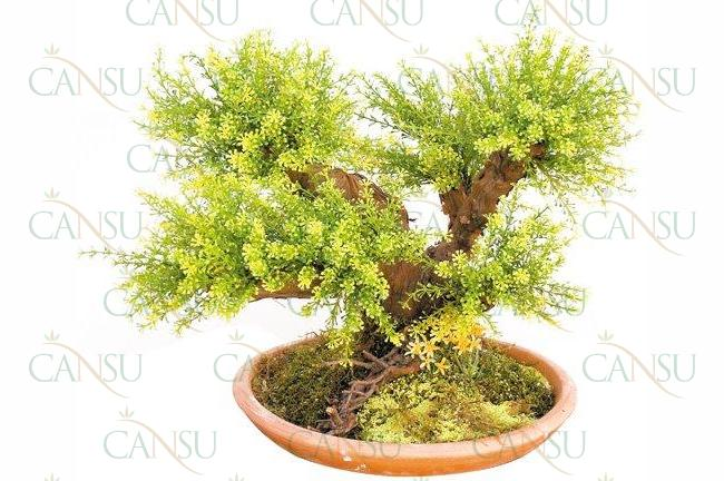 Yapay Bonsai, Model No: CT-02-107