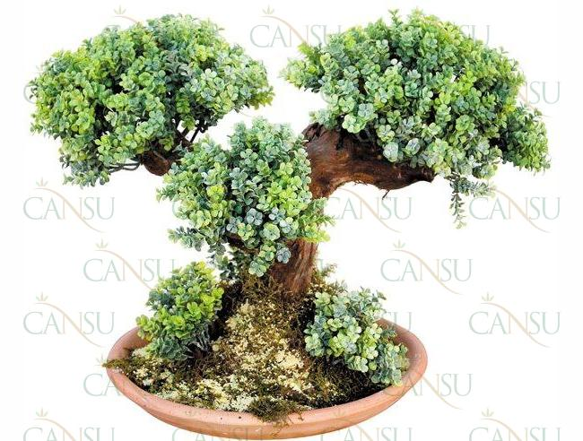 Yapay Bonsai, Model No: CT-02-129