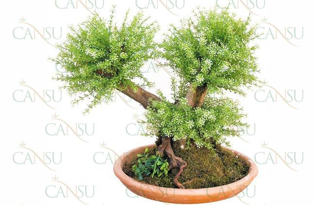 Yapay Bonsai, Model No: CT-02-161