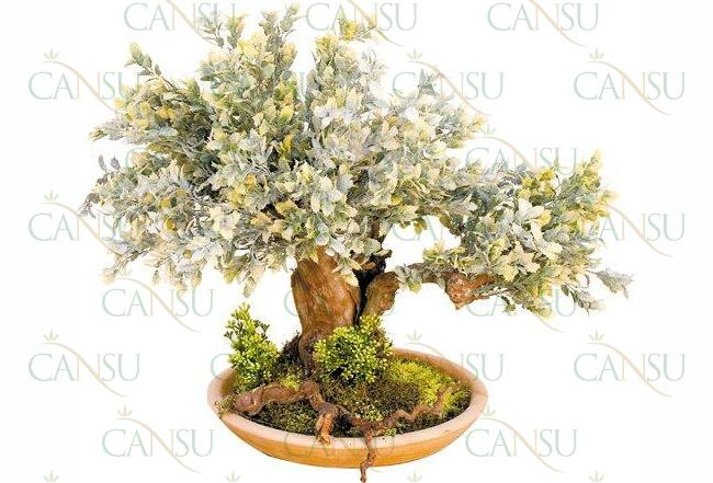 Yapay Bonsai, Model No: CT-02-166