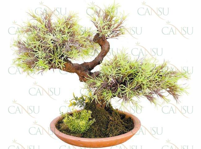 Yapay Bonsai, Model No: CT-02-181